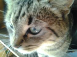Grisou, chat