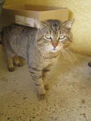 Grisou, chat Gouttière