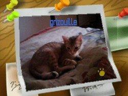 Grisouille, chat Gouttière