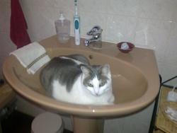 Grisouille, chat