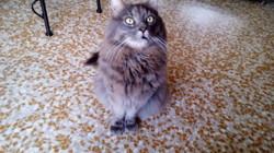 Grizou, chat Gouttière