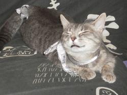 Grizouille, chat
