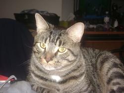 Grizzly, chat Gouttière