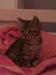 Groovy, chat Gouttière