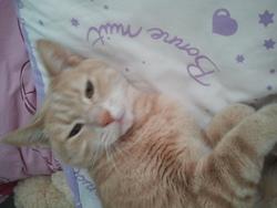 Gros Chat, chat Gouttière