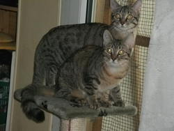 Groseille Et Princesse, chat