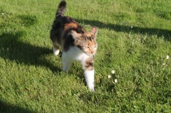 Groseille, chat Gouttière