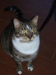 Grosminet, chat