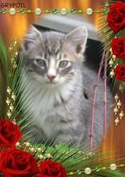 Grypoil, chat Gouttière
