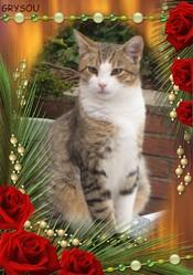 Grysou, chat Gouttière