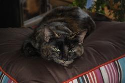 Guapa, chat Gouttière