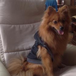 Gucci, chien