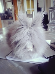 Gucci, rongeur Lapin