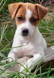 Gueyssi, chien