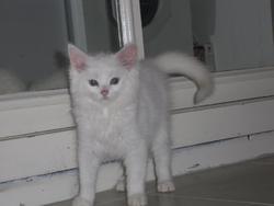 Guigui, chat