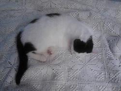 Guimauve, chat