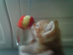Guirlande, chat