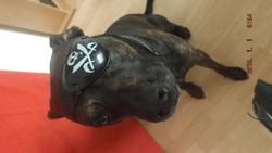 Guismo, chien