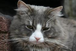 Guismo Au Paradis Des Chats, chat Gouttière