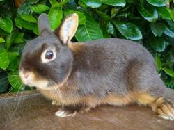 Guizmo, rongeur Lapin