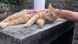 Guizmo, chat Gouttière