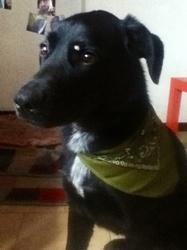 Guizmo, chien