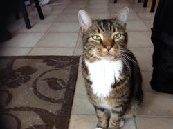 Guizmo Décédé, chat