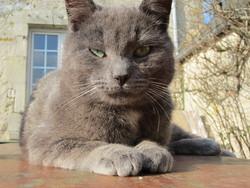 Gulli, chat Gouttière