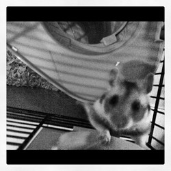 Gus, rongeur