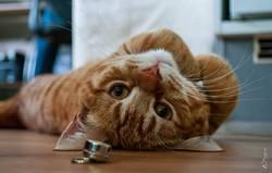 Gus, chat Gouttière
