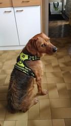Gus, chien