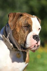 Gus-Gus, chien