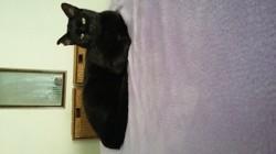 Gusgus, chat Gouttière
