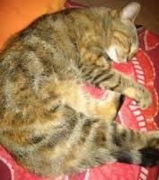 Gusto Au Parasdis, chat Gouttière
