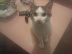 Gutxi, chat Gouttière