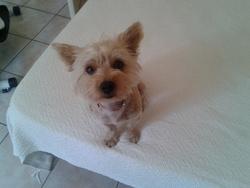 Gwen, chien