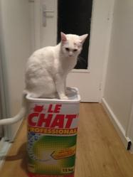 Gwenn, chat Gouttière