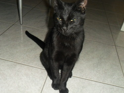 Gypsi, chat Gouttière