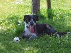 Gypsie, chien