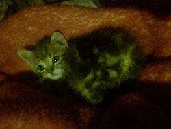 Gyzmo, chat Gouttière