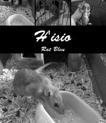 H'Isio Décédé, rongeur Rat