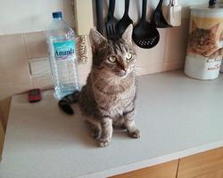 Hachi, chat Gouttière