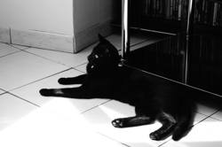 Hadès, chat Gouttière