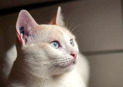 Haku, chat Gouttière