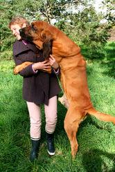 Halban, chien Chien de Saint-Hubert