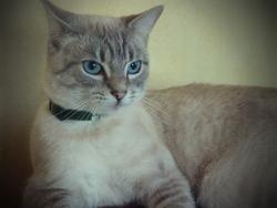 Hali, chat Gouttière