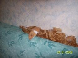 Hamtaro - Dcd, rongeur Hamster