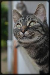 Happy, chat Gouttière