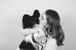 Haribo, chien Épagneul nain continental