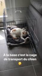 Haribo, chat Européen